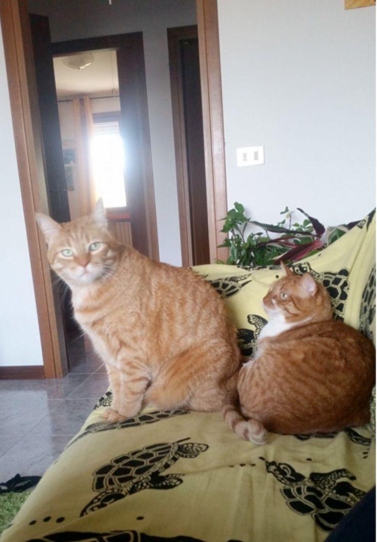 Foto gatti di Claudia