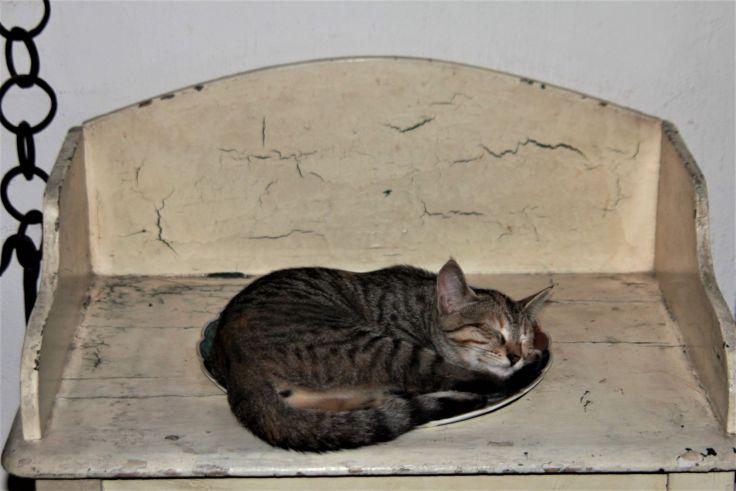 Foto di Tuppy cat