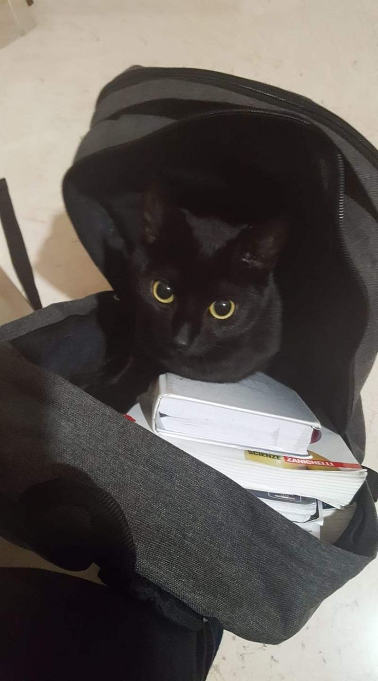 Foto dei vostri gatti: Luna
