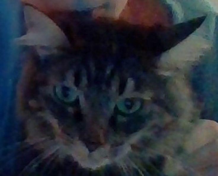Foto del gatto Alvin