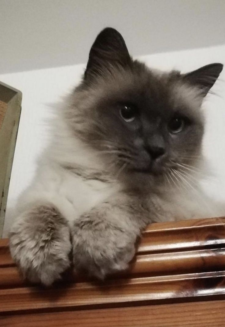 Il gatto di Piero: Giovannino