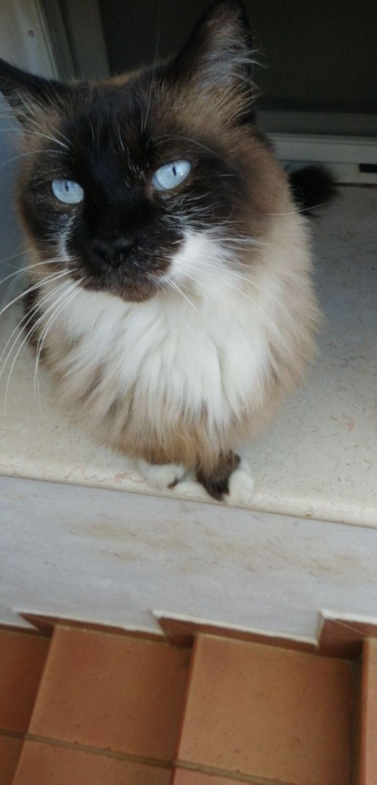 Il bellissimo gatto di Giovanni: Aaron