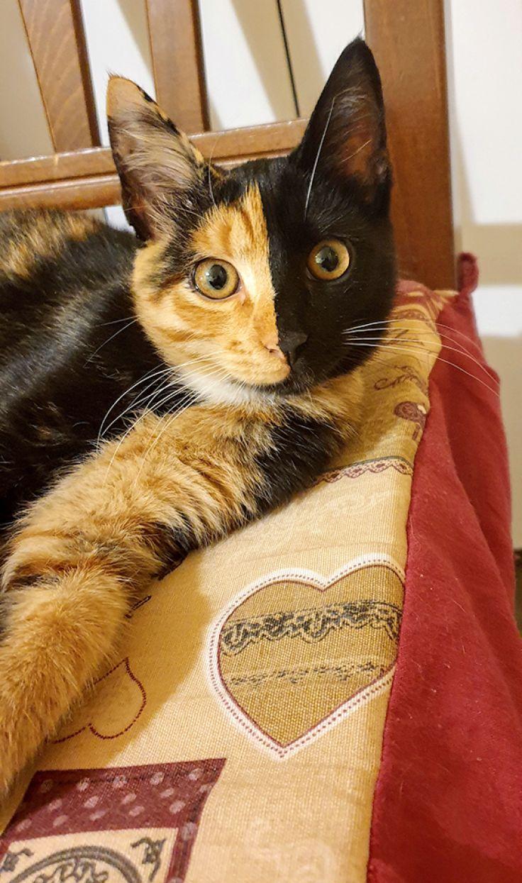Gina. Dolcissima gattina