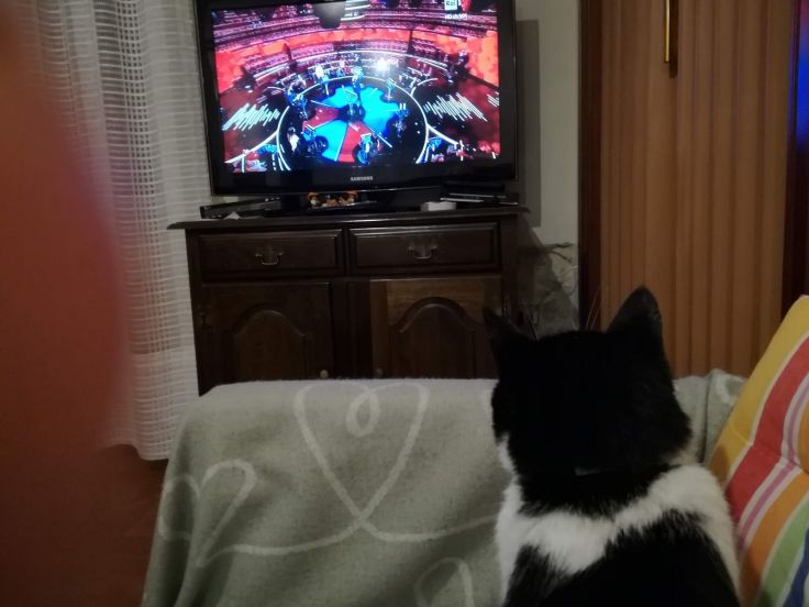 Gatto guarda tv