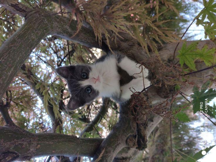 Foto di gatto Athos sull'albero