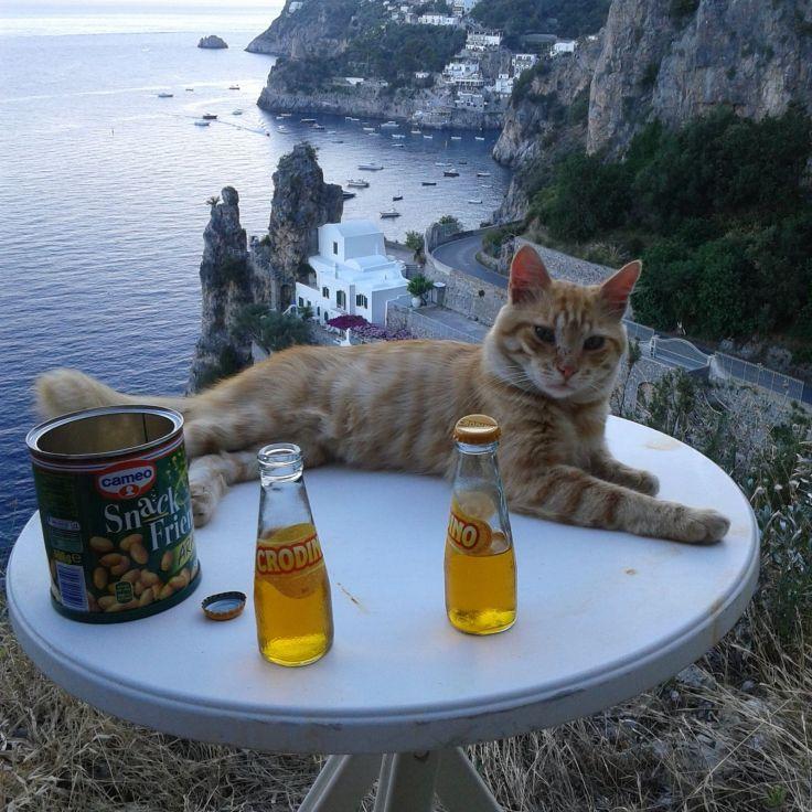 Gatto che fa l'aperitivo