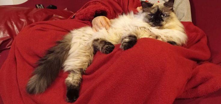 Foto gatto Molly
