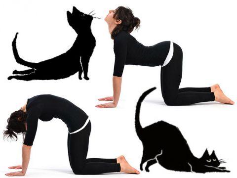 Yoga. Posizioni del gatto