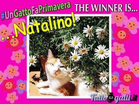 Foto del gatto vincitore