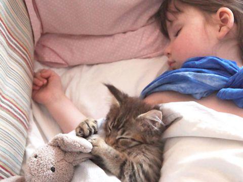 Gatto siberiano con bambina