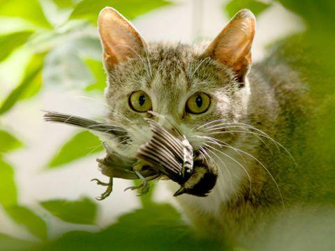 Il gatto e la caccia