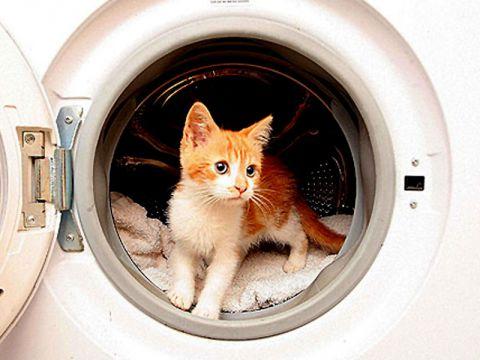 Gatto nella lavatrice