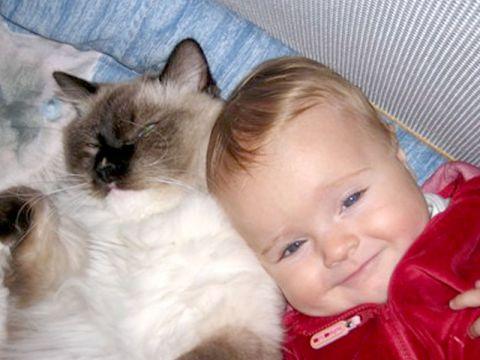 Ragdoll con bambino