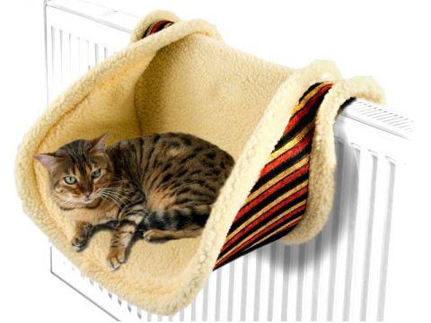 Cucce Per Gatti Come Scegliere