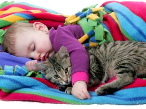 Bambino che dorme col gatto