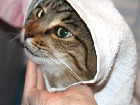 Cura e igiene del gatto il bagno - Come fare il bagno al gatto ...