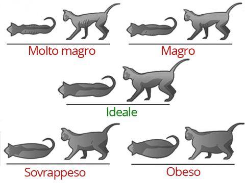 Schema del peso del gatto