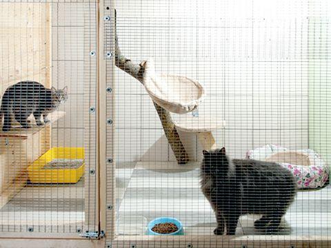 Pensioni per gatti
