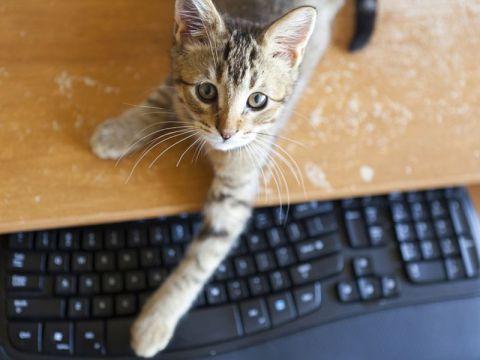 Gatto sulla tastiera
