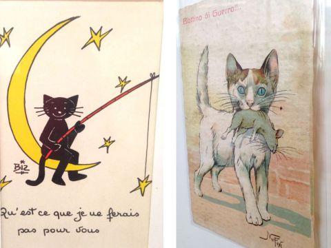 Illustrazioni sui gatti
