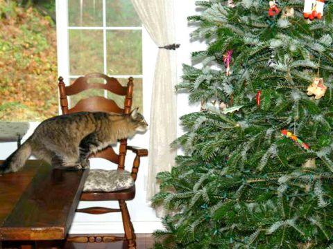 Come proteggere l'albero di Natale dal gatto
