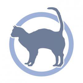 Coda del gatto: siamo amici