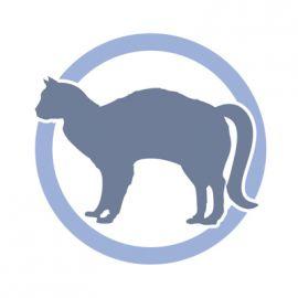 Coda del gatto: sono preoccupato