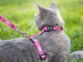 guinzaglio a pettorina per gatto