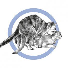 Accoppiamento dei gatti