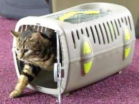 Trasportino comune per gatto