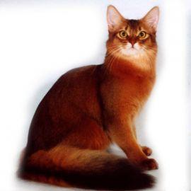 Gatto con mantello rosso