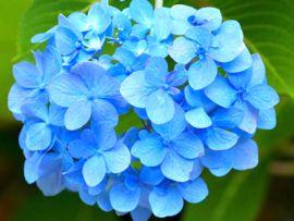 Erbe, piante e fiori tossici per i gatti