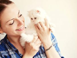 Cura dei gatti di razza