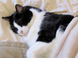 I sintomi delle malattie del gatto