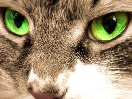 Colori e forma degli occhi del gatto