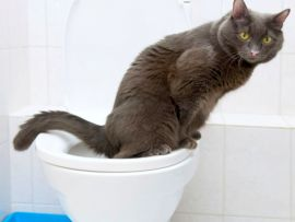 Stitichezza del gatto