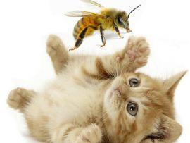 Cosa fare in caso di punture di insetti e vipere