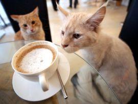 A Roma il bar per gatti