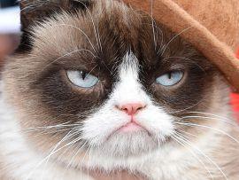 Grumpy. Il gatto brontolone