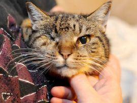 Tuppence, il gatto più vecchio del mondo