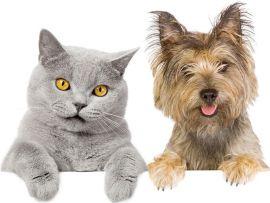 Cane e gatto come farli convivere