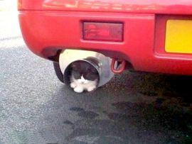 Gatto nel tubo di scappamento