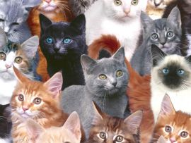 Come scegliere il gatto