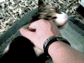 Leggi sul maltrattamento gatti