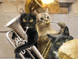 Gatti musicisti