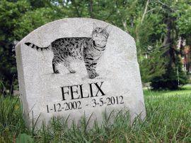 Morte del gatto