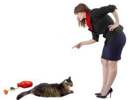 Comportamenti indesiderati dei gatti