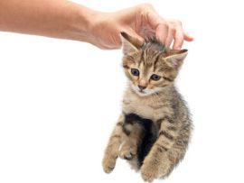 Come scegliere un gattino