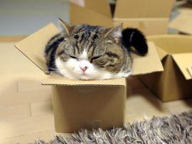 I comportamenti più pazzi del mondo dei gatti