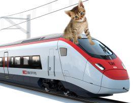 Come viaggiare col proprio gatto in treno